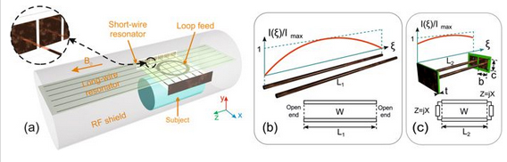 A Novel Metamaterial-Inspired RF-coil for Preclinical Dual-Nuclei MRI