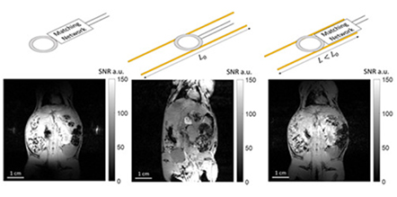 Wireless coils based on resonant and nonresonant coupled‐wire structure for small animal multinuclear imaging